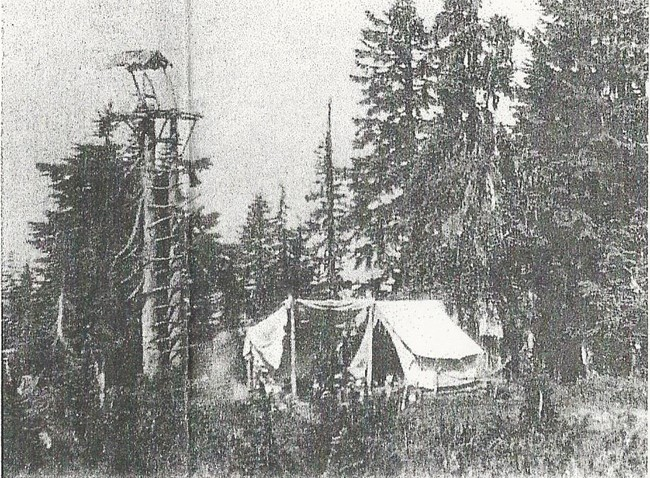 1924 photo of tree stand predecessor by Norm McCausland