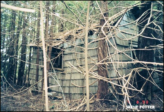 Cabin being torn apart by trees 7/8/2000