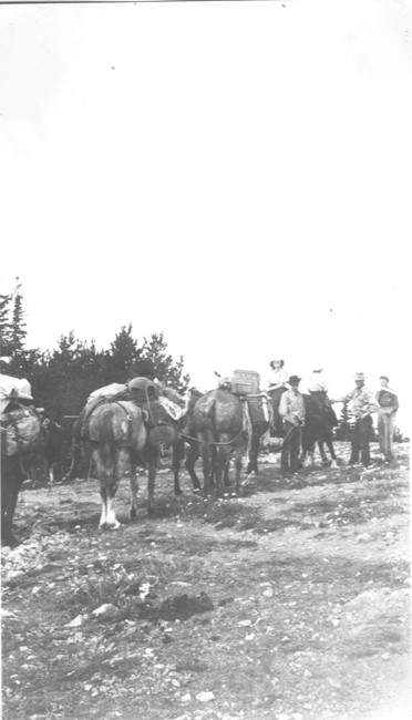 Mule team to access the tower in 1941 (photo from Mark Lutz)